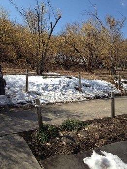 ろうばい園の雪.jpg