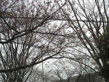 児童公園の桜のコピー.jpg
